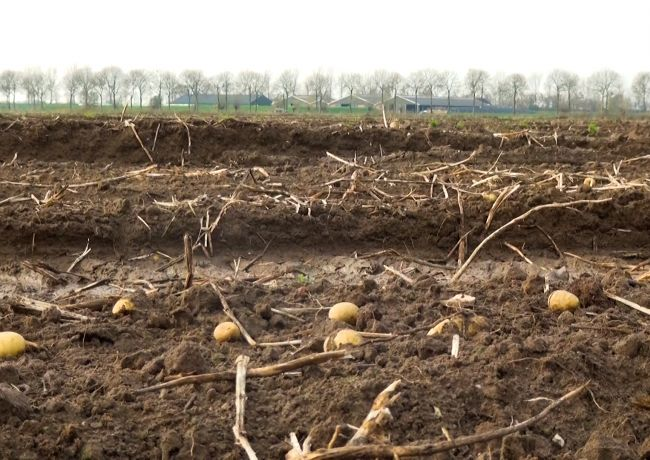 Fruit Roven: nieuw burgerinitiatief tegen voedselverspilling